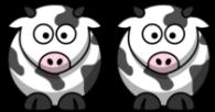 2 Kühe